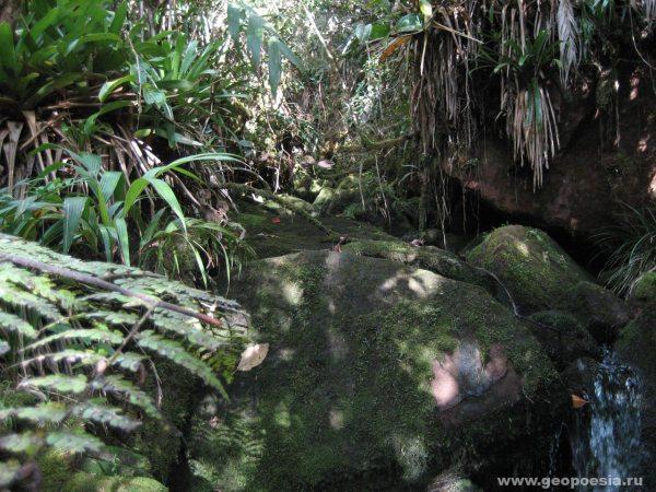 Фото тропического леса
