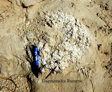 Daemonelix burrow in Arikareean strata. The burrow is a corkscrew shaped burrow made by the ground beaver Palaeocastor.