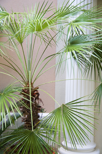 palm and column