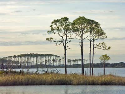 pines on 30A