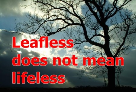 leafless does not mean lifeless
