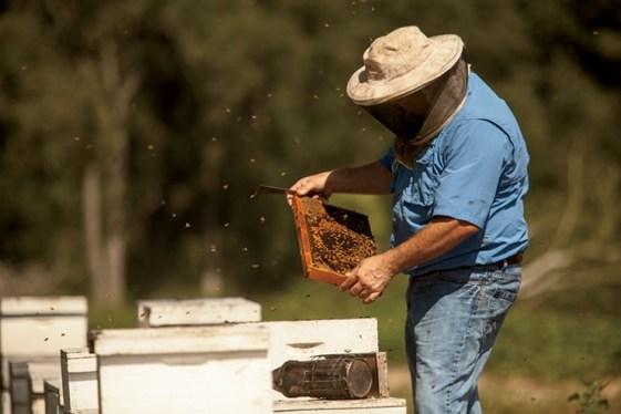 Weeks Honey - UGA SBDC Client