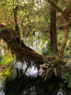 Hoh Rainforest_0094