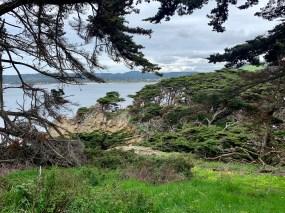 Point Lobos_0519