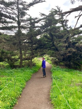 Point Lobos_0521