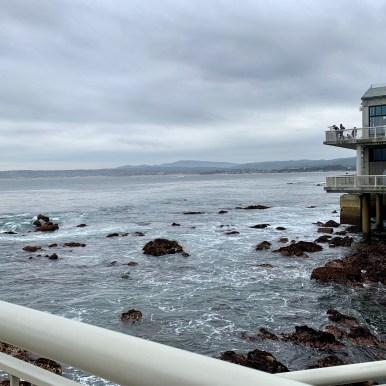 Monterey Aquarium_1072