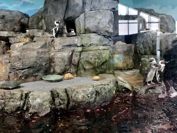 Penguin feeding_1732