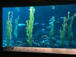 Monterey Aquarium_1781