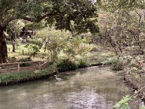 Sankeien Gardens_1077