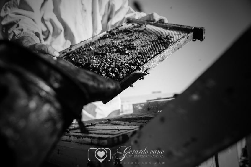 Fotos Boda Cuenca: Sesión de pre-boda con girasoles en Cuenca (15)