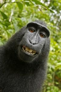 Der Schopfmakak grinst schelmisch in die Kamera, während er sich selbst fotografiert. (© dapd) Fotoquelle: sueddeutsche.de