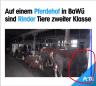 Screenshot PeTA Video Zeitmarke: 00:04 und 00:17 – Da wurde einfach etwas entfernt, was gestört hatte
