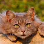 PeTA setzt 1.500 € Belohnung für das Ergreifen von Katzenfängern aus