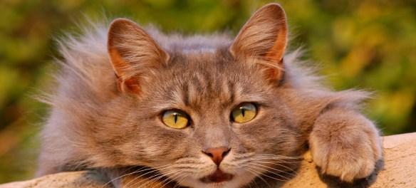 Mysterium Katzenfänger