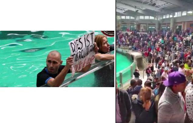 Radikale Tierrechtler stürmen Delfinarium und guckten verdutzt, als Zuschauer ihnen den Rücken zukehrten. Foto Facebook