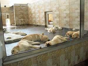 PeTA greift erneut Zoo Zajac an / Foto: https://www.golocal.de/duisburg/versandhandel/zoo-zajac-gmbh-1u33G/fotos/?p=11