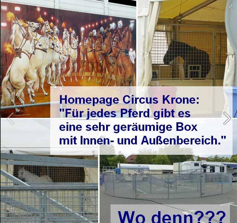 Aufnahmen des Tierschutzverein Zwickau und Umgebung / Screenshot Facebook