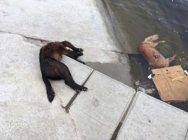 Viele Tierfreunde vor Ort setzen sich bereits für ein Ende der Hundetötungen ein. Es wird Zeit, dass Russland auf eine langfristige Populationskontrolle heimatloser Tiere setzt, um nachhaltige Veränderungen zu erwirken. Tötungsaktionen sind nicht nur unethisch, sondern auch nicht geeignet, die Zahl der rund 2 Millionen streunenden Hunde in Russland zu verringern.