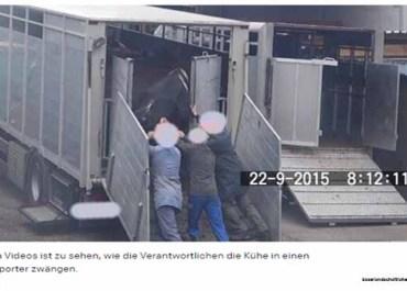 Schweizer Gericht stellt Persönlichkeits- vor das Tierrecht