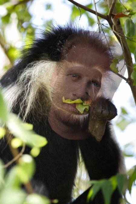 Affenflucht zeigt Dummheit von Frank Albrecht auf (25)