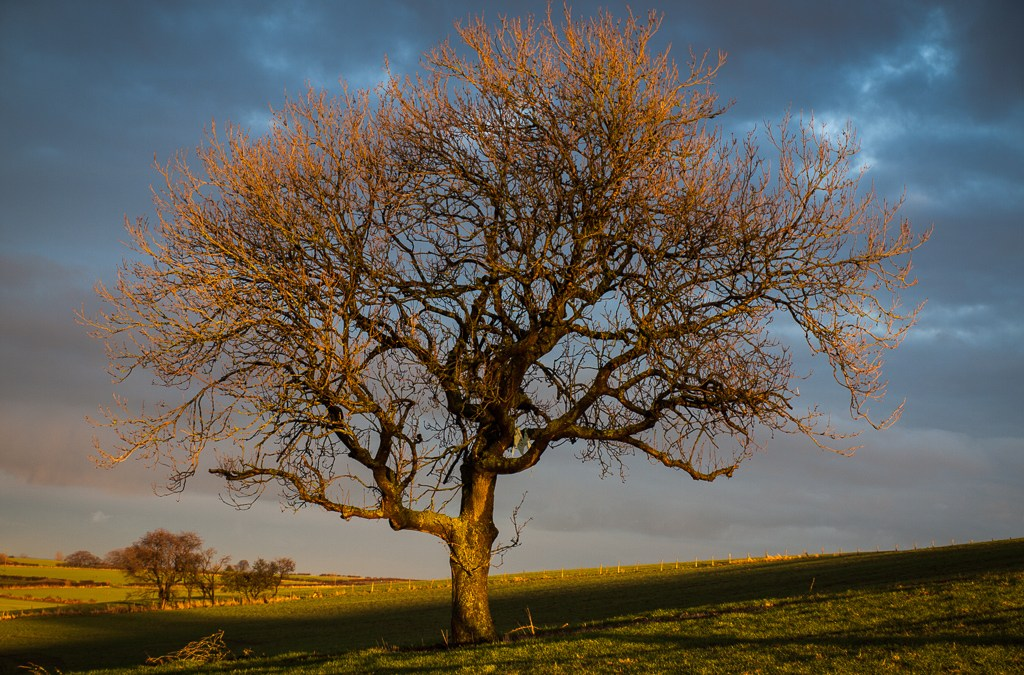 Last Light on Tree