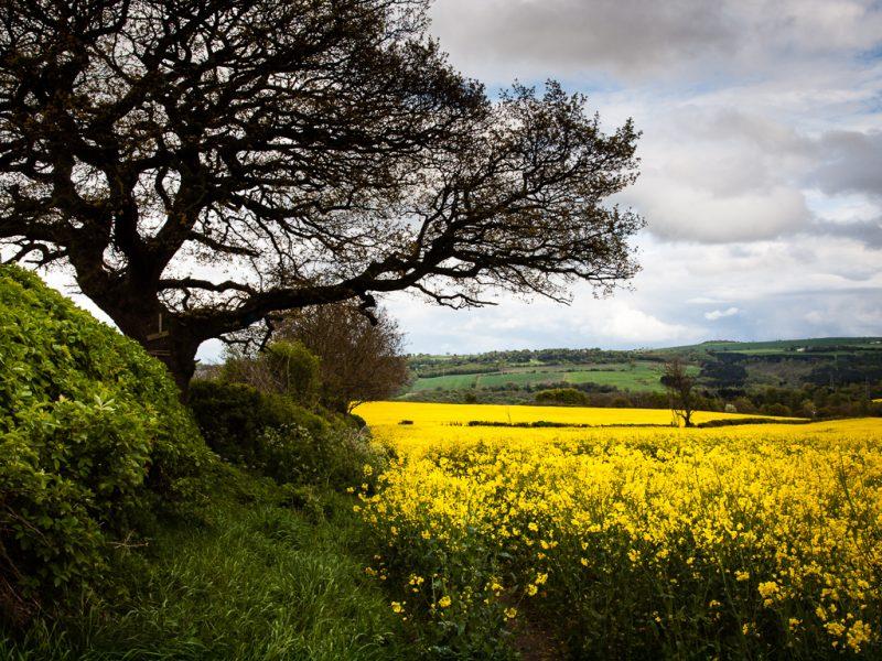 View on the Derwent Valley