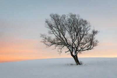 Lone Tree in Dusk