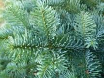 3 Punkte für einen guten Adventskranz Weihnachten  %GerhardtBlumen