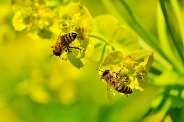 soin visage pollen abeille missha