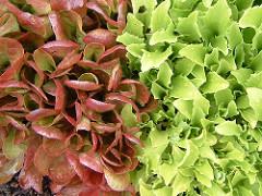 Warzywa lisciaste
