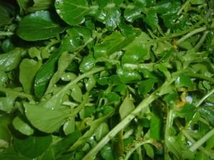 Watercress, Courtesy of Wikipedia