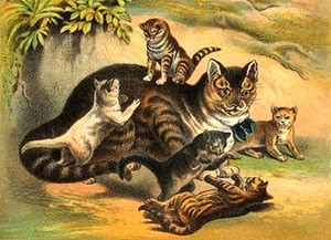 Common House Cat with Kittens, Author's Collection