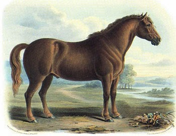 The Type of Draught Horse that Pulled the Mail, Author's Collection