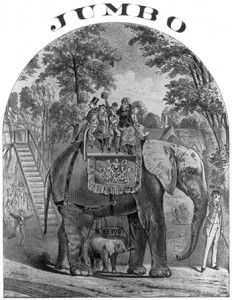 Music Cover Illustration of Jumbo the Elephant
