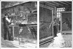 Charles Jamrach Feeding His Animals