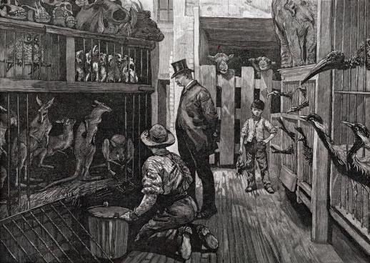 Charles Jamrach - inside his shop.