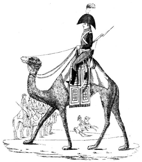 camel corps - Napoleon on a camel.