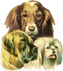 Dogs, Public Domain