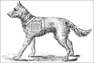 Moustache - Example of War Dog Carrying Ammunition, Public Domain