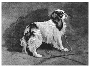 dogs during the French Revolution - spaniel
