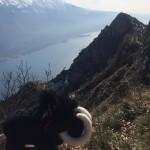 Trail Gard 013