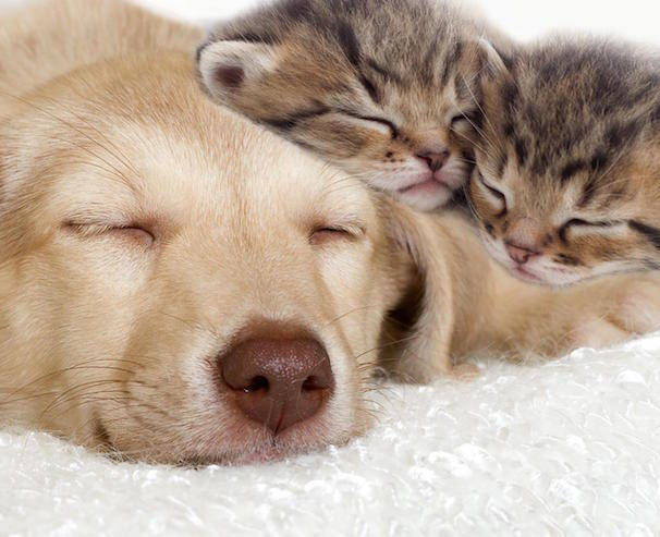 Pet pathogens on cats dogs, etcs