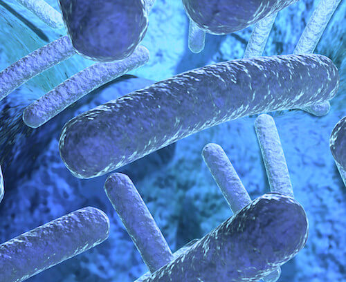 Important Facts About Antibiotic Resistant Shigella