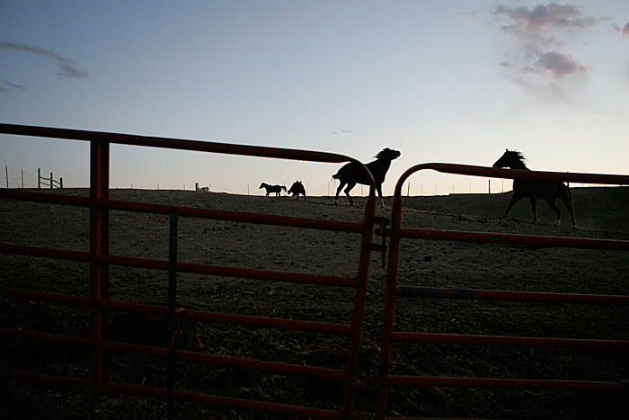 Canon EOS 1D MarkII — ISO 800 @ f/2.8 and 1/500 sec — Horses walk around the enclosure at sunset in Mack, Colorado