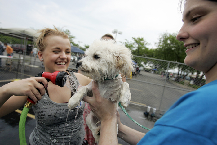 MAX GERSH | ROCKFORD REGISTER STAR Kacy Peters (left) hoses off Beemer, a 4-month-old Bichon mix, while Amanda Witczak holds him Saturday, June 4, during a charity dog wash at Lou Bachrodt Auto Mall in Cherry Valley. Proceeds from the event benefit Noah's Ark Animal Sanctuary, PAWS Humane Society and Rockford Career College Vet Tech Program. ©2011