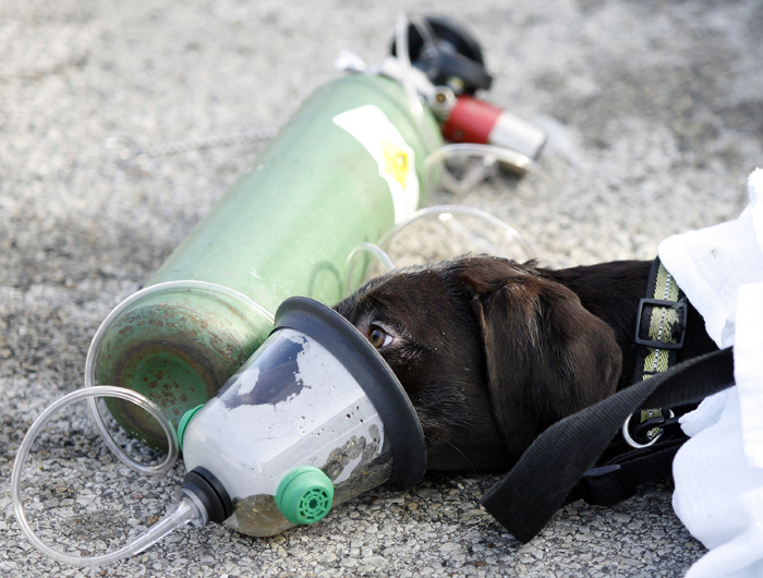 dog breathing through oxygen mask