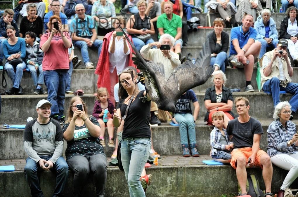 Roofvogelshow openlucht theater De Klaproos Wolfheze