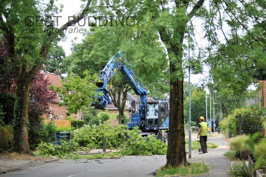 Zieke bomen Patrimoniumweg Heelsum gekapt