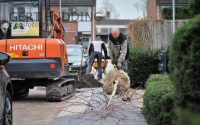 Groenvoorziening Everts&Weijman plant in opdracht Renkum 360 bomen