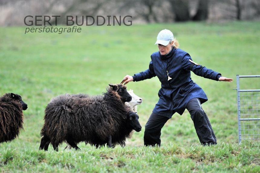 EK schapendrijven in Renkum en Heteren
